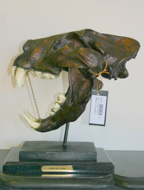 Bronze African Lion Skull Fossil