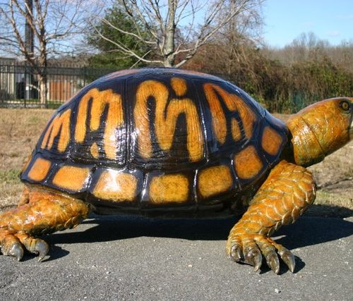 Bronze Box Turtle (Large)