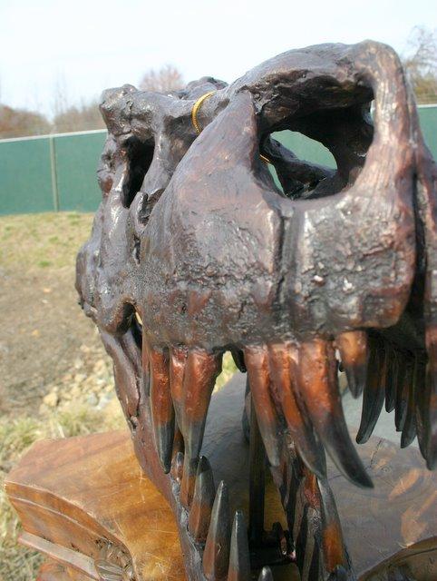 T-Rex Dinosaur Fossil Skull