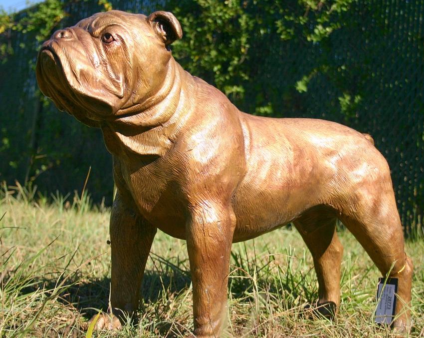 Bulldog AKC CKC Casting