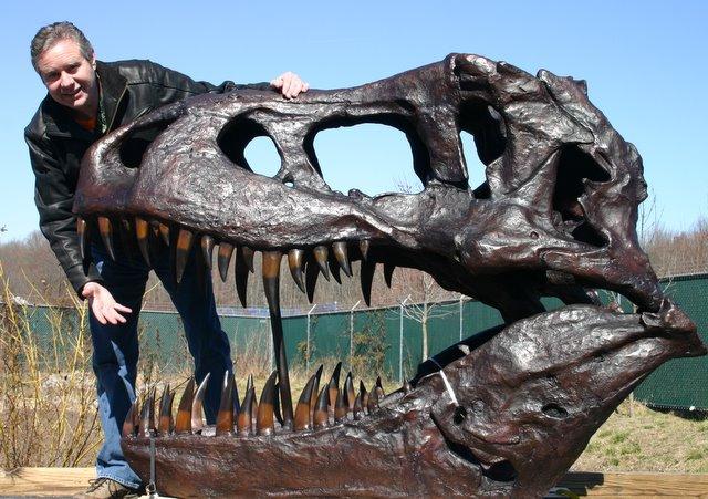 T-Rex Dinosaur Fossil Skull Large